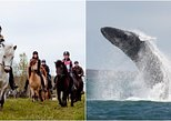 Icelandic Horse Riding and Whale Watching from Akureyri