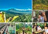 Batur Volcano- Rice Terrace - Monkey Forest- and Tirta Empul Purification Temple
