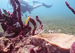 7-Night, 10-Dive Scuba Diving Experience in Carriacou
