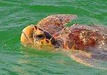 Marine Life Boat Tour - Manatees, Sea Turtles, Dolphins & More!