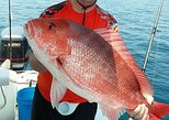 Snapper Fishing (6 Hours) (8 Hours) (10 Hours)