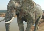 3 day Wildlife Experience: Addo Elephant Park and Mountain Zebra park