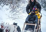 1 Day Dog Sledding/Cart Tour from Fairbanks at Borealis Basecamp