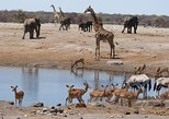 Experience Etosha, Brandberg &Twyfelfontein with a Taste of the Coast of Namibia