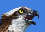Birding Photography Boat Tour - Explore Rookery Bay Reserve!