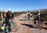 Bike, vinhos e almoço no Luján de Cuyo (Mendoza). Mendoza, ARGENTINA