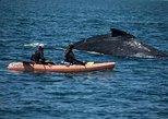 Santa Cruz Double Kayak Ocean Rental - 4 Hours (Valid only at 413 Lake Ave)