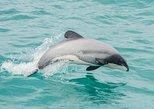 Akaroa Dolphins | Harbour Nature Cruises