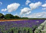 Hokkaido Blue Pond, Farm Tomita and Biei Tour in Summer!
