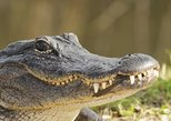 Everglades Adventure | Air boat Tour and Alligator show with Bus Transportation