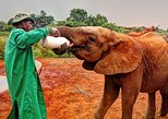 2 Hours Baby Elephant orphanage
