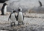 Best Attractions In Cape Town Private Tour