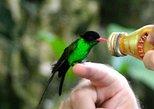 Rocklands Bird Sanctuary & City Highlights from Montego Bay & Grand Palladium
