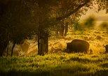 USA - Wyoming: Take a Sunrise Tour of Grand Teton National Park