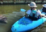Manatee, Dolphin and Mangrove Tunnels with Cocoa Kayaking!