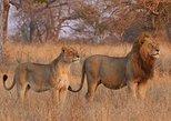 2 Days Budget Kruger Park Safari - From Johannesburg