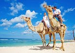 Camel Ride!! Beach and desert experience in Los Cabos