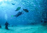 Mexico - Baja California Sur: Become a PADI Open Water Certified diver (complete course)
