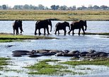 Africa & Mid East - Botswana: Chobe Day Safari From Victoria Falls