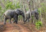 5 Days Adventurous Wildlife Safari in Mole National Park, Ghana