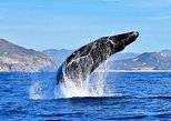 Cabo Group Whale Watching Tour