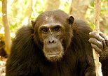 3 Days Chimpanzee Trekking at Gombe National Park Tanzania