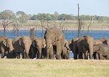 Private Tour: Kaudulla National Park Safari