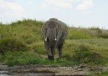 3days Safari Serengeti&ngorongoro