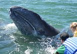 2-Day Magdalena Bay Gray Whale Van Tour