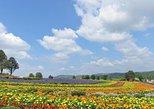 """Asahiyama Zoo, Biei Blue Pond """"Aoi-Ike"""" and Furano Area, Ninguru Terrace!"""