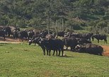 Addo elephant national park full day game drive R1950.00