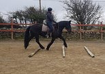 Riding lessons in arena. Moneygold, Co Sligo. Guided. 20 or 45 minute options.