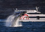 Ultimate Whale-Watching Cruise from Circular Quay or Darling Harbour