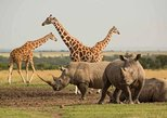 1 DAY OLPAJETA CONSERVANCY FROM NAIROBI (MINIMUM 2 PAX)