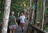 Tour por la selva tropical de Daintree y Cape Tribulation desde Cairns. Palm Cove, AUSTRALIA