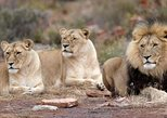Aquila game reserve and safari