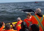 Whale Watching Cruise with Transportation from Quebec City