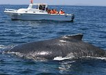 Half Day Whale Watching Samana in Catamaran- Morning or Afternoon