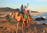Mexico - Baja California Sur: Camel Ride!! Beach and desert experience in Los Cabos