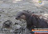 Asia - Bangladesh: Otter Fishing - Bangladesh