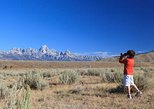 (Private) Half Day Grand Teton Wildlife Safari