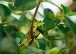 4 Day Puerto Vallarta Photography Retreat (With Botanical Garden Tour)