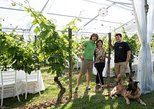 Tuscany Wine Tours Podere Pellicciano – Agrisole