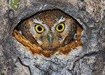 USA - Arizona: Quirky and Creative Sabino Canyon Saguaro Scavenger Hunt