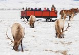 """Best of Jackson Hole"" Wildlife Safari - Winter"