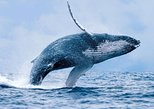 Hermanus Whale Watching and Wine Tasting Tour