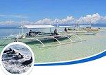 Dolphin Watching and Island Hopping Alona - Balicasag - Virigin island