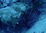 Caribbean - Aruba: Night Shore Diving Mangel Halto