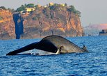 dolphin + whale watching, snorkeling island, swimming with whales, island tour
