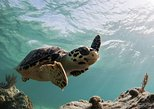 Caribbean - Cayman Islands: Swim With The Turtles Tour at Cayman Turtle Centre
